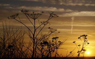 Бесплатные фото растения,зонтики,солнце,закат,небо,желтое,фото