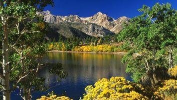 Бесплатные фото река,лес,деревья,небо,скалы,течение,листья