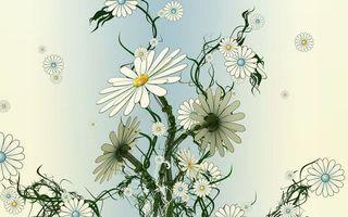 Обои ромашки, белый, желтый, зеленый, стебель, рисунок, цветы