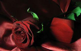 Обои роза, бардовая, красная, лепестки, шипы, листья, ткань, шкатулка, бархатная, подарок, цветы