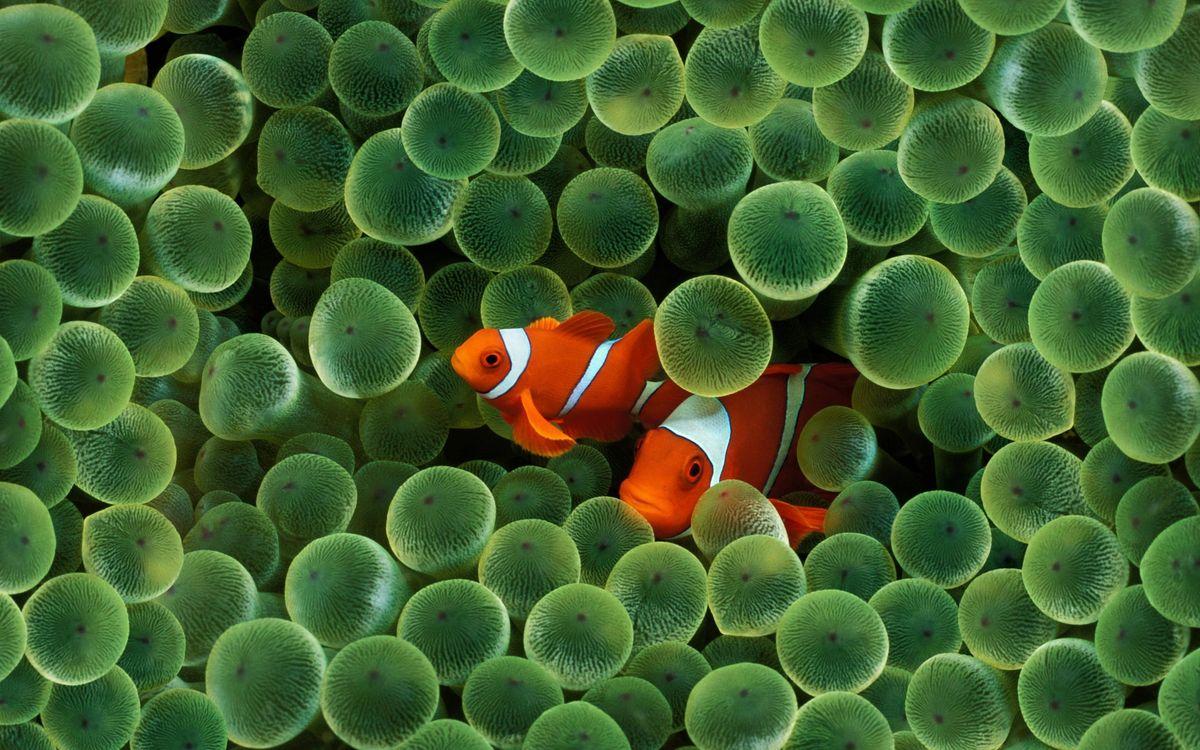 Обои рыба, пара, водоросли картинки на телефон