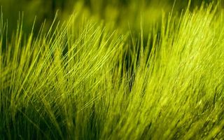 Заставки трава, зеленая, салатовая, яркая, лето, жара, отдых, деревня, утро, день, природа