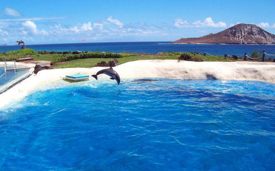 Бесплатные фото тропики,море,дельфин,разное