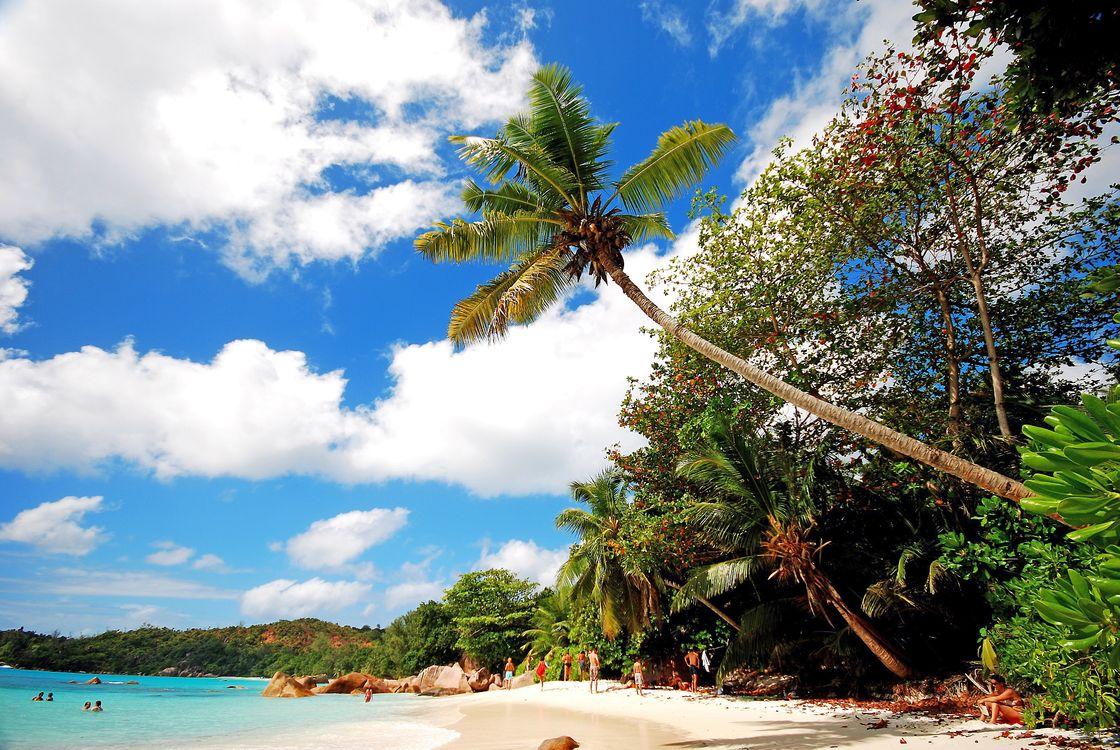 Бесплатно тропики, море, пляж - фото новые