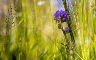 Фото бесплатно цветы, листья, трава, ветки, зелень, бутоны, василек