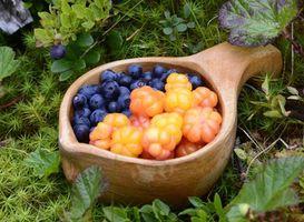 Обои ягоды, черника, лес, трава, зеленая, кусты, еда