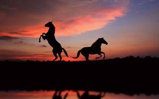 Фото бесплатно закат, кони, пейзаж