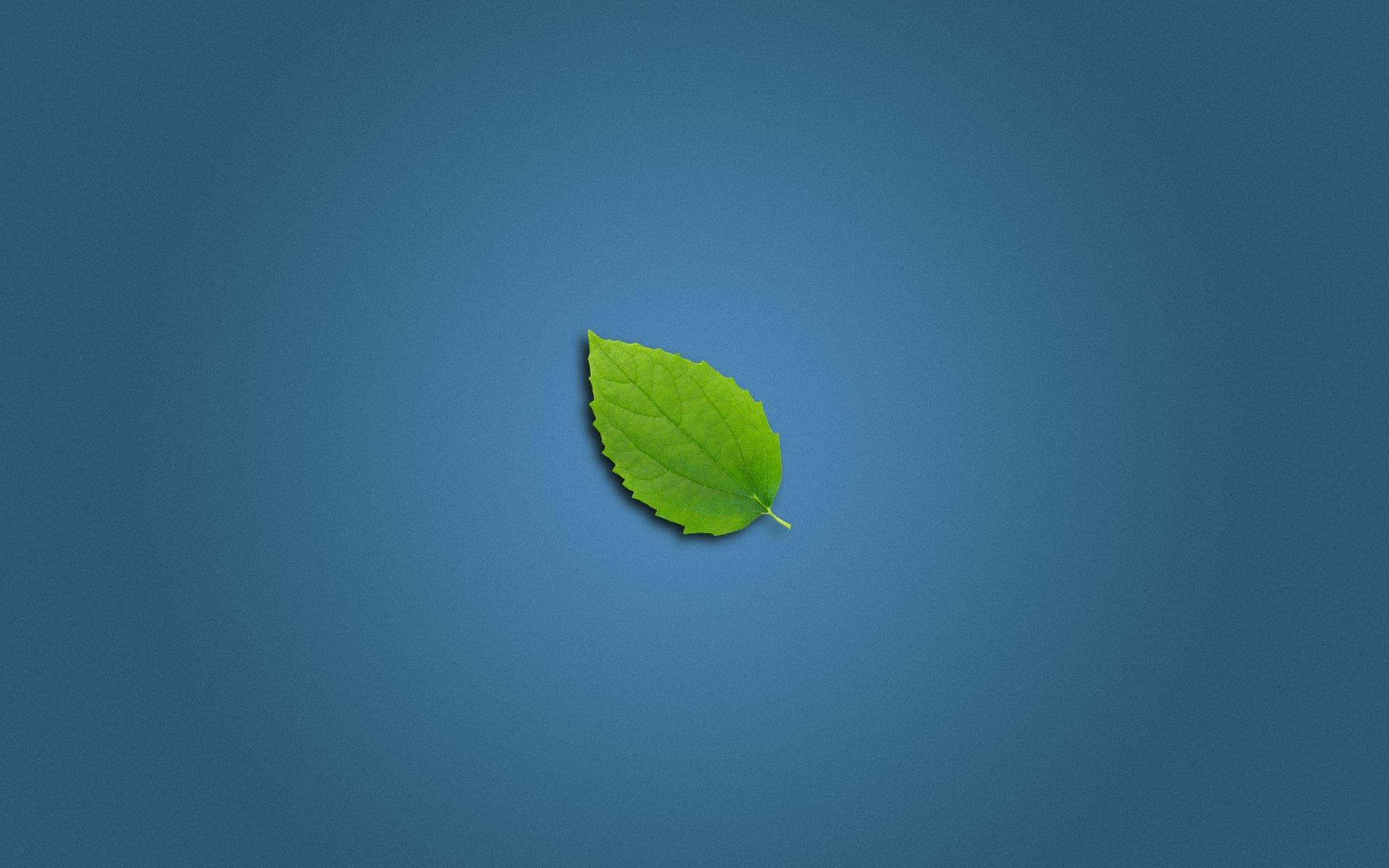заставка, лист, зеленый