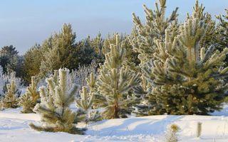 Фото бесплатно иней, снег, природа