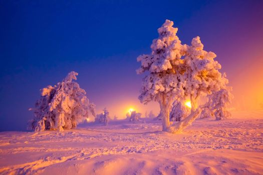 Photo free winter landscape, trees, snow