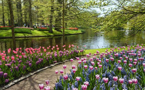 Photo free summer park, flowers, trees