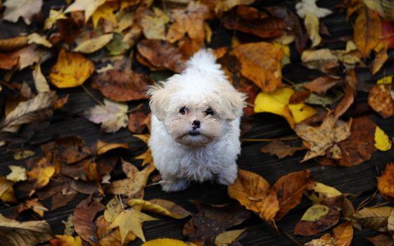 Фото бесплатно пес, маленький, листья