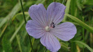 Фото бесплатно цветок, фиолетовый, семена