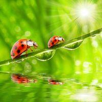 Бесплатные фото божьи коровки,солнце,вода,капли,зелень,лето,божья коровка