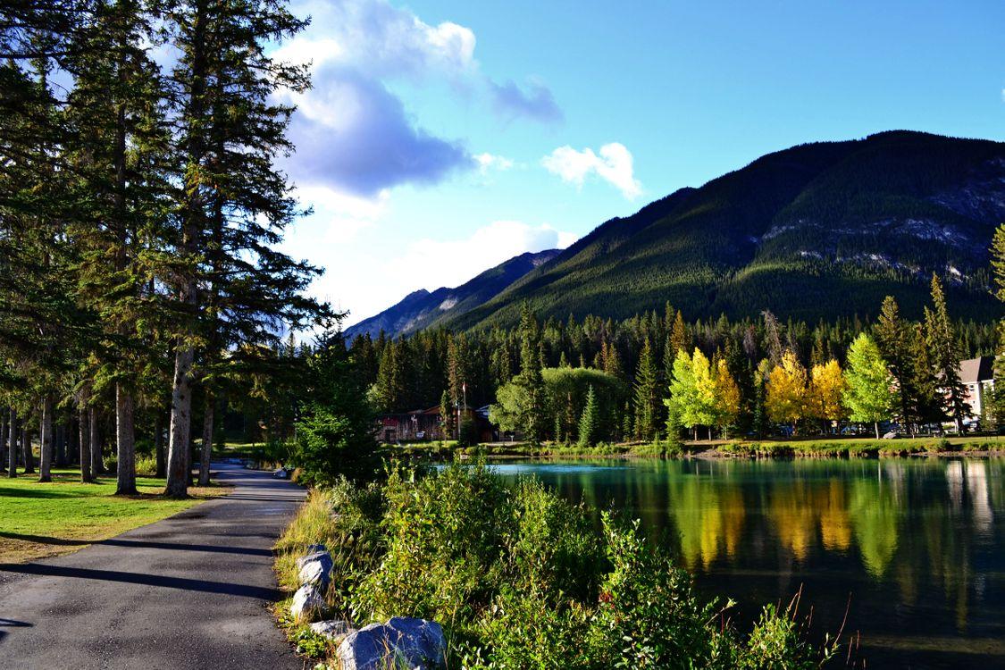Фото бесплатно гора, лес, небо - на рабочий стол