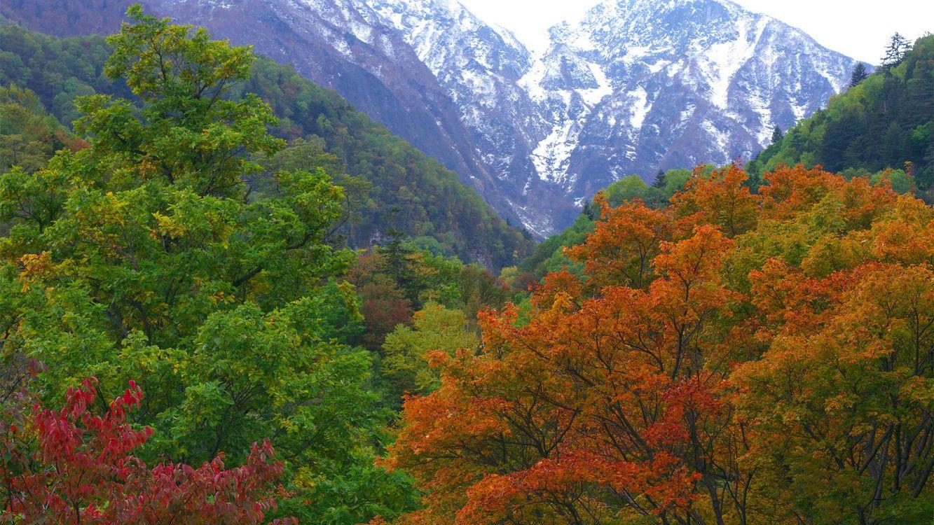 Фото бесплатно горы, снег, небо, деревья, листва, лес, природа, природа