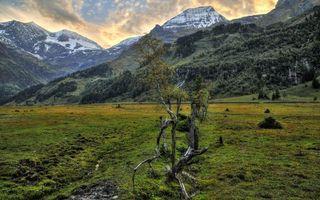 Бесплатные фото горы,вершины,снег,деревья,трава,болото,коряга