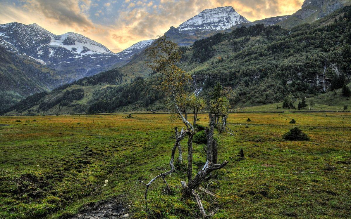 Фото бесплатно горы, вершины, снег, деревья, трава, болото, коряга, природа, природа