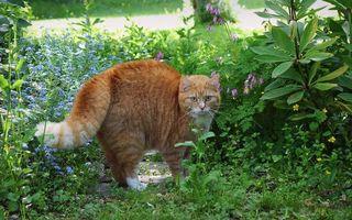 Фото бесплатно кот, рыжий, испуг, шерсть, дыбом, трава, ситуации, кошки