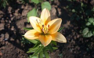 Бесплатные фото лепестки,желтые,тычинки,листья,земля,черная,цветы