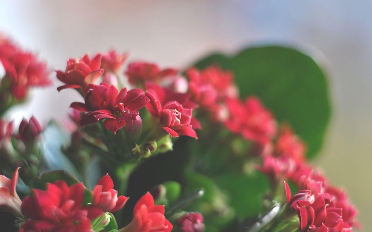 Фото бесплатно лепестки, маленькие, красные - на рабочий стол