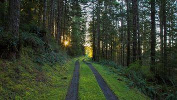 Бесплатные фото лес,деревья,трава,дорога,свет,солнце,природа