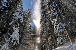 Скачать заставку лес, зима, снег