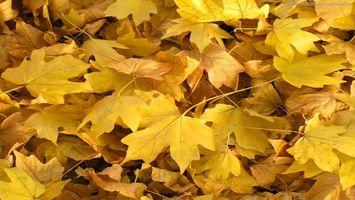 Бесплатные фото листья,желтые,листопад,осень,земля,заставка,обои