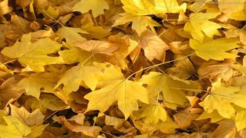 Фото бесплатно листья, желтые, листопад