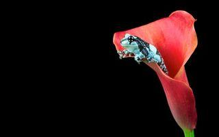 Фото бесплатно лягушка, морда, лапы
