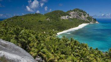 Фото бесплатно берег, вода, пальмы