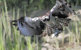 Фото бесплатно Орел, птицы, брызги