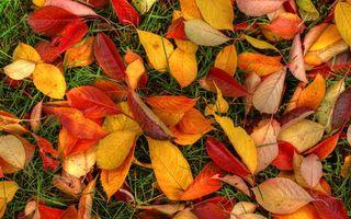 Бесплатные фото осень,листья,оранжевые,желтые,трава,зеленая,природа
