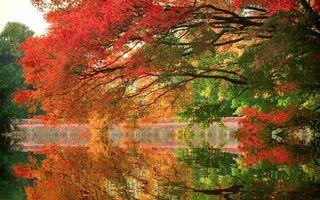 Бесплатные фото осень,озеро,отражение,деревья,листья,красные,природа