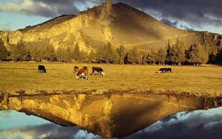 Заставки озеро, отражение, пастбище