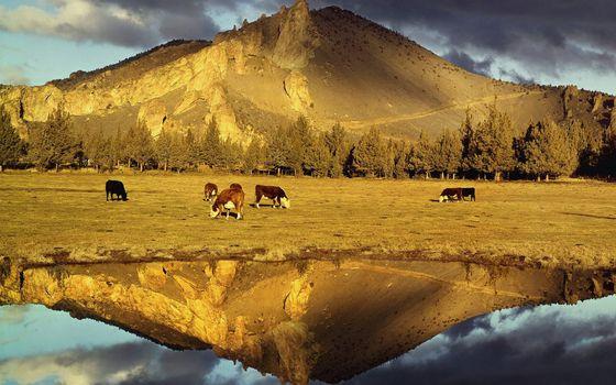 Фото бесплатно озеро, отражение, пастбище
