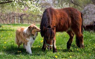 Фото бесплатно пес, лошадь, конь