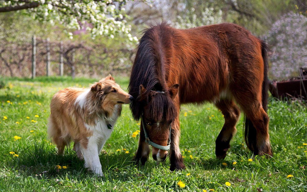 Фото бесплатно пес, лошадь, конь - на рабочий стол