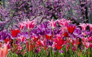 Фото бесплатно поле, сад, клумба
