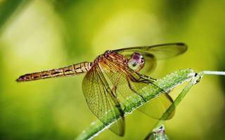 Бесплатные фото стрекоза,глаза,крылья,травинка,макро,насекомые