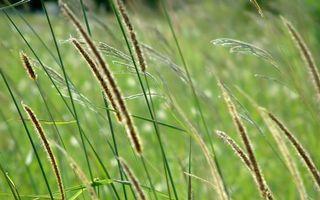 Бесплатные фото трава,литья,поле,лето,луг,фото,тепло