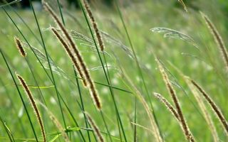 Фото бесплатно трава, литья, поле