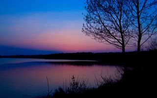Бесплатные фото вода,трава,деревья,елки,листья,пейзажи,природа