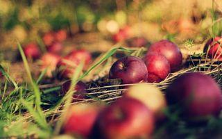 Заставки яблоки,урожай,сад,трава,луг,поле,красные