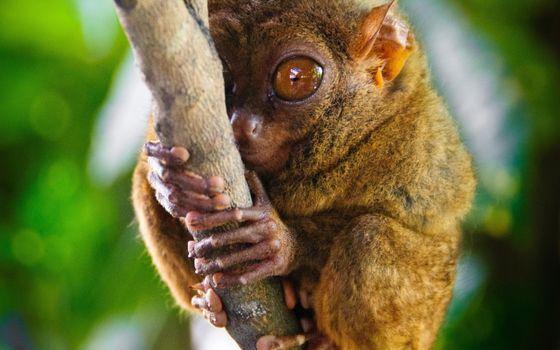 Бесплатные фото зверек,шерсть,уши,глаза,лапки,дерево,ствол,зелень,нос,рот,животные