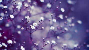 Обои цветы, бутоны, сиреневый, макро, размытость, фон, ветки