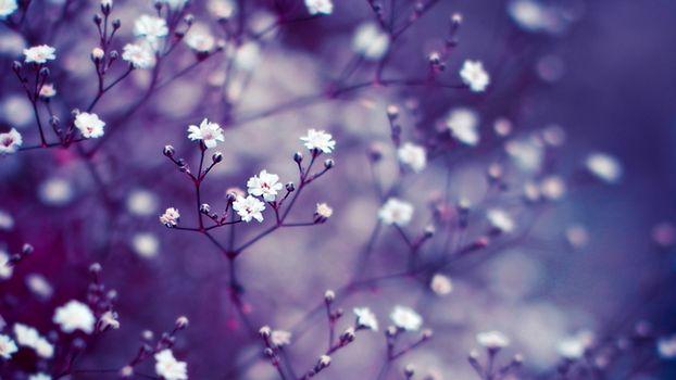 Бесплатные фото цветы,бутоны,сиреневый,макро,размытость,фон,ветки
