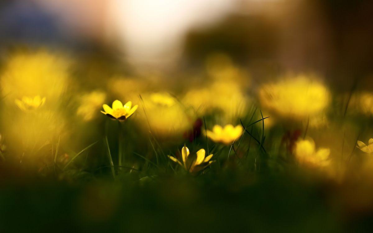 Фото бесплатно трава, весна, цветы, природа, размытость, чистотел, разное