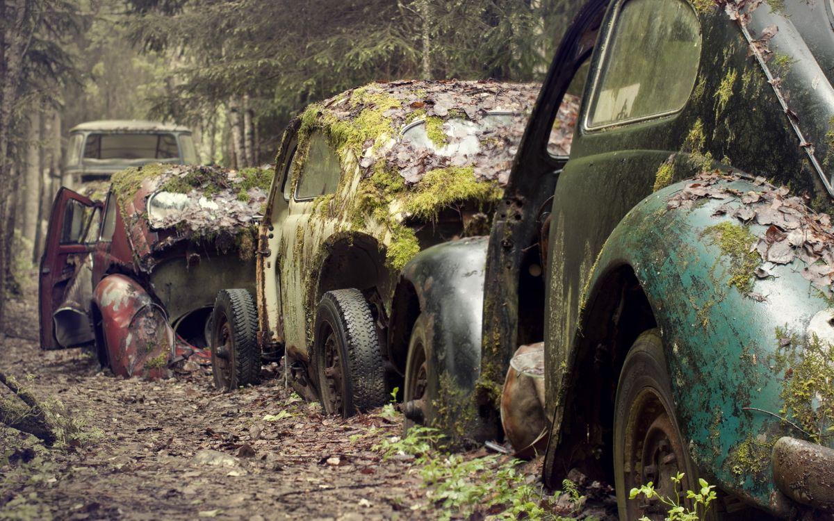 Фото бесплатно мох, лес, дорога, лом, машины, машины