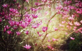 Фото бесплатно цветение, весна, цветок